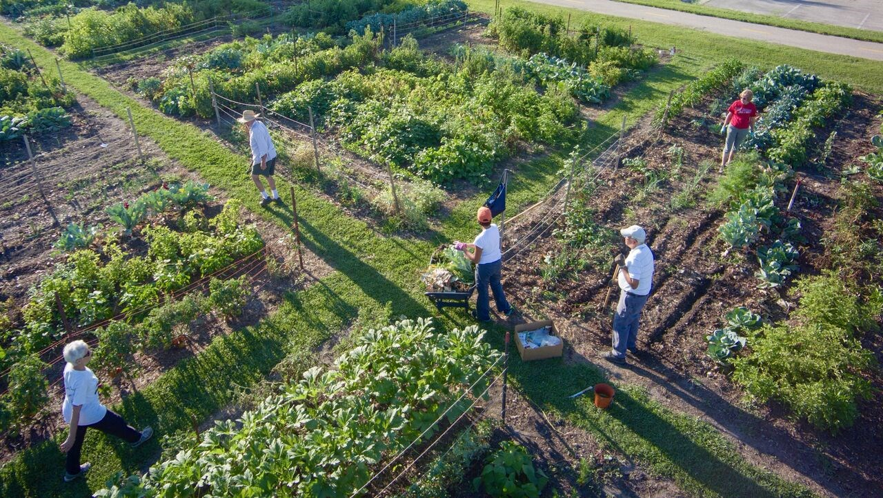MOM's Food Pantry Gardens Provide Fresh Fruits and Veggies for Local Families